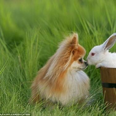 动物拥吻可爱瞬间