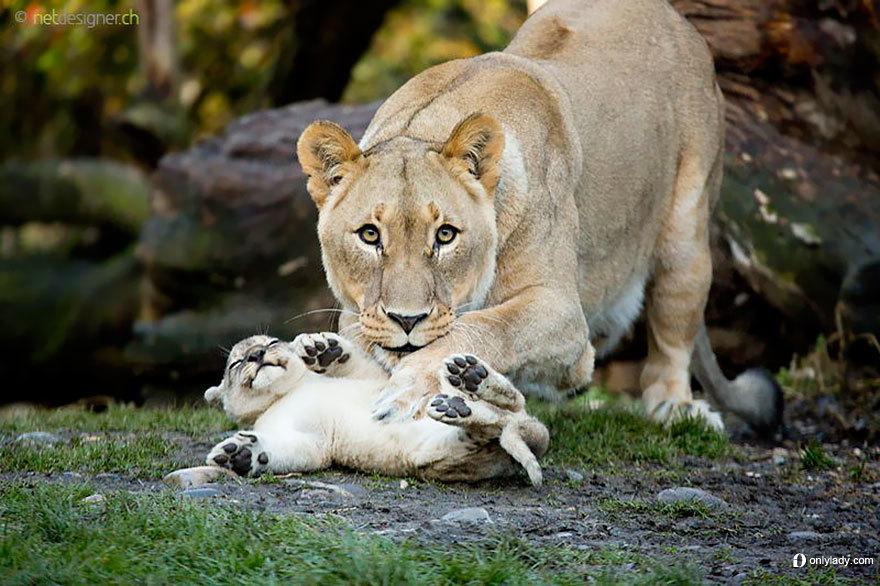 动物王国24个最暖心的温情瞬间(第19页)_图片库_高清