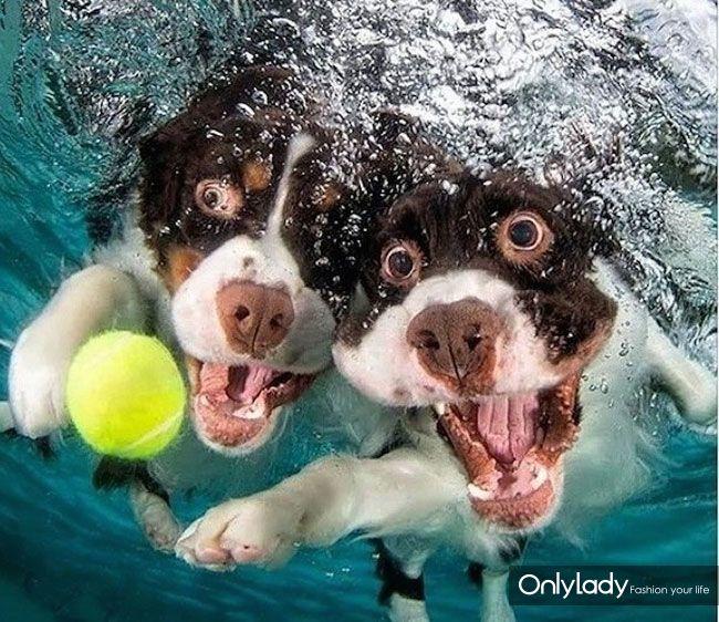 小狗入水追球萌照:呲牙咧嘴表情搞笑